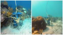 Ocean acidification sensors deployed in Belizean waters